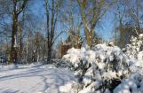 Winter im Park 08.12. 2012_117.jpg