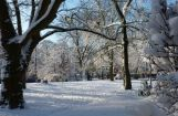 Winter im Park 08.12. 2012_102.jpg